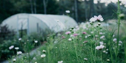 GardenStyle   Basil & Bergamot Flower Farm Tour