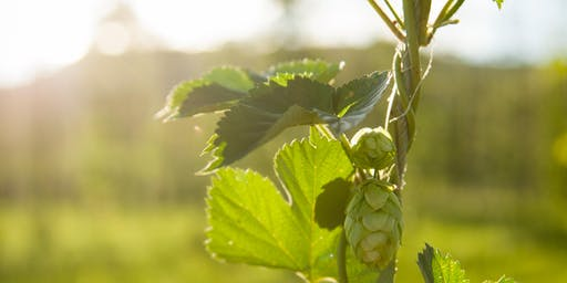 Pine River Hops - Harvest Dinner