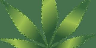 Cannabis Vendors