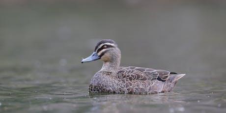 Wetland Bird workshop at Bibra Lake tickets