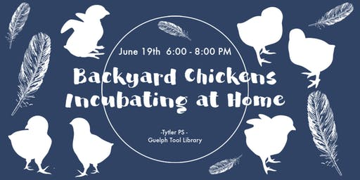 Backyard Chickens: Incubating Chicken Eggs at Home!