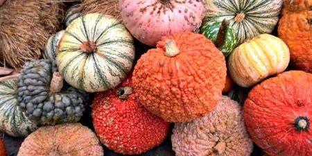 The Annual Pumpkin Fun Run