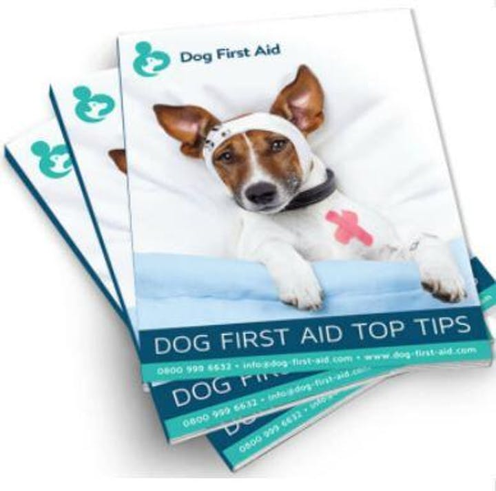 first aide dog magazines