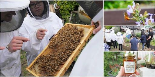 Urban Beekeeper 101, Honey Tasting, & Hive Inspection with Beekeeping Suit