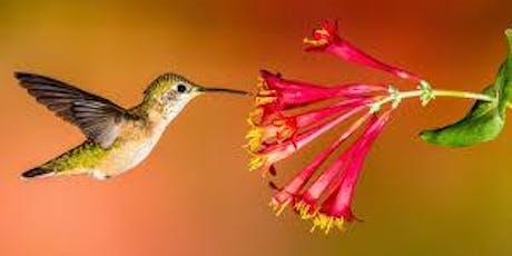 Hummingbird Feeder Workshop tickets