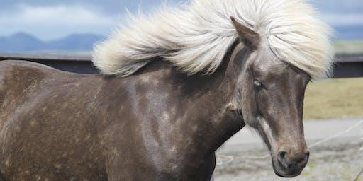 Smart Girls & Ponytails: An Equine Assisted Social & Self-Esteem Program