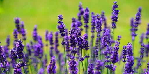 Lavender Day Make & Take
