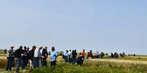 Organic Field Walks