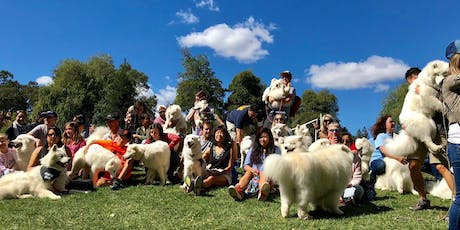 San Francisco Samoyed Rescue Annual Picnic 2019 tickets