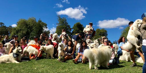 San Francisco Samoyed Rescue Annual Picnic 2019
