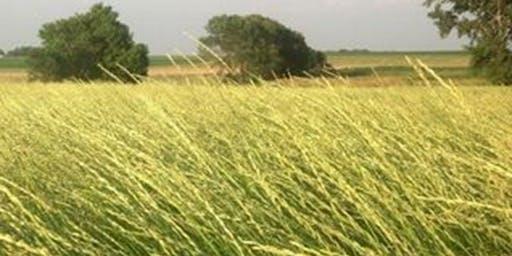 Intermediate Wheatgrass (Kernza) Field Day