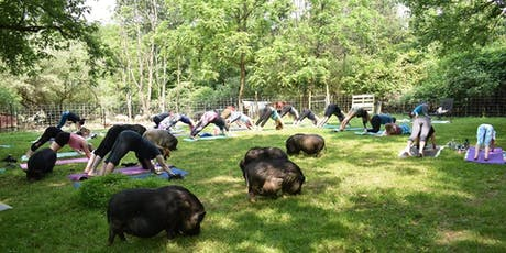Yoga with Pigs with Liz July tickets