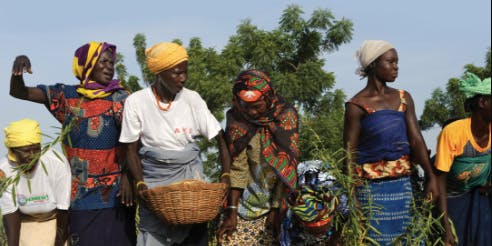 Reclaiming the Land: Burkinabe Bounty Film Screening