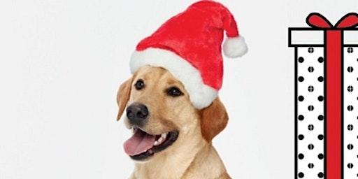 Holiday Pet Photo Nights