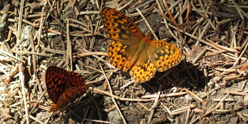 Hike & Learn: Butterflies of CSNM with Ranger Kristi