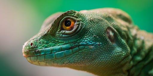 Lizard art for kids