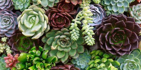 Succulent Planter Workshop tickets
