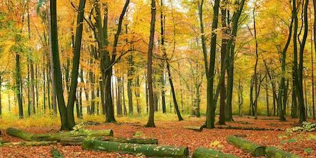 October Fineshade Wood Visitors Centre Meditation Retreat (Rockingham Forest) tickets
