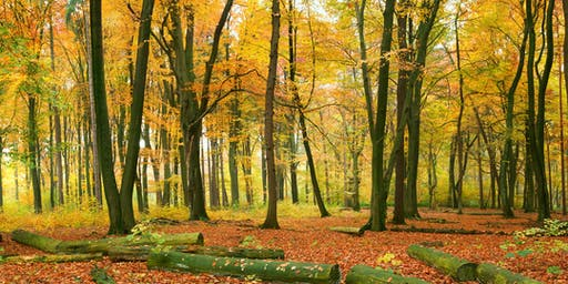 October Fineshade Wood Visitors Centre Meditation Retreat (Rockingham Forest)