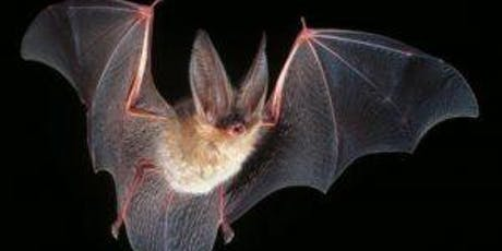 Bat Walk & Talk tickets