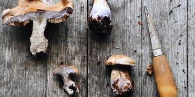 The Wild Kitchen: Autumn Abundance
