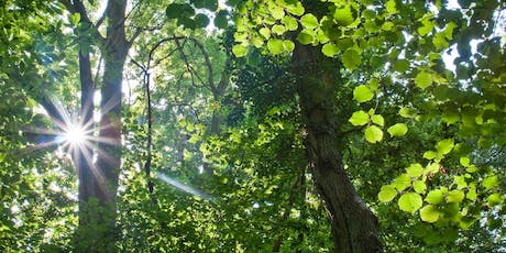 Forest Bathing+. National Trust - Winkworth Arboretum tickets