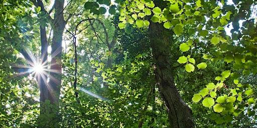 Forest Bathing+. National Trust - Winkworth Arboretum