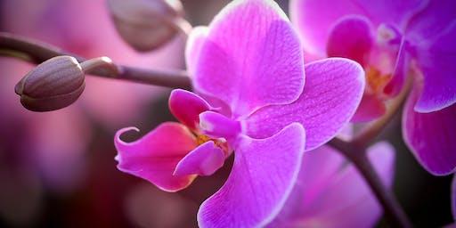 Conferencia gratuita: Esencias de Orquídeas Amazónicas y Esencias de Gemas