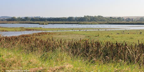 Spotlight Tour at RSPB Titchwell Marsh tickets