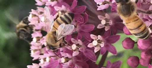 Pollinator Garden in a Pot