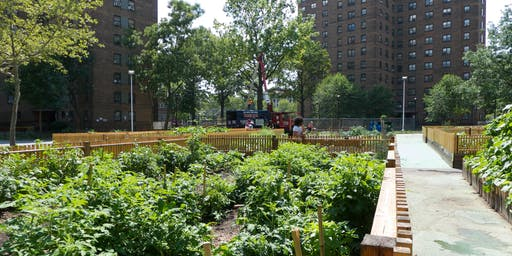 Charting the Future of Urban Agriculture in New York City
