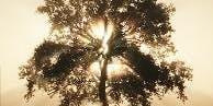 Healing of the Family Tree