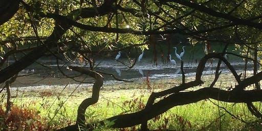 Early Fall Birding on Petty's Island