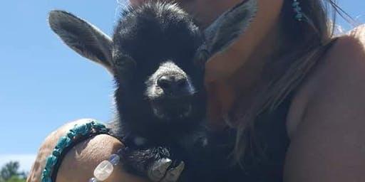 Goat Yoga 6/22/19 @ Pine meadow alpaca farm