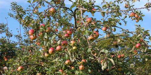 Hedgerow Food and Remedies