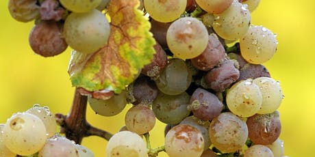 Grape Expectations: The Story of Chenin Blanc, Chardonnay and Riesling  tickets