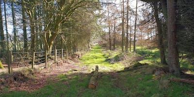 Woodland Adventures - Mythology, Legend, and Heritage