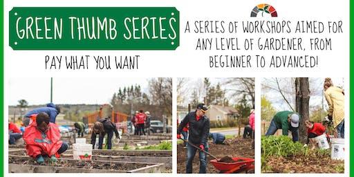 4) Build Your Own Rain Garden
