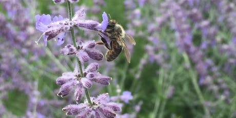 """Creating Pollinator Corridors in Vermont"" BYO Brown Bag Lunch & Networking  tickets"