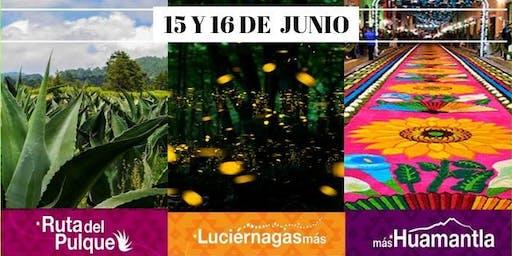 Santuario de las luciérnagas ruta del pulque y tlaxcala 15 y 16 junio