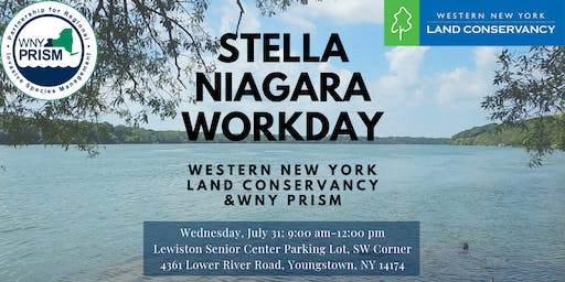 Stella Niagara Workday