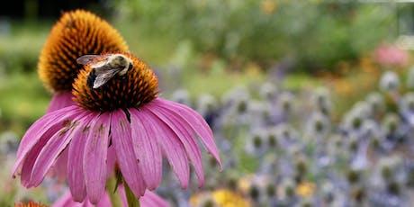 Pollinator Week: Bee Safari tickets