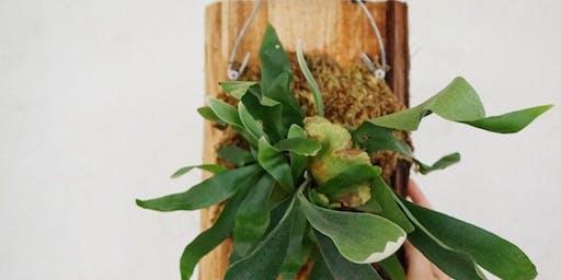 Plants & Wine: Fern Mounting Workshop