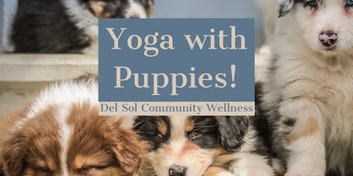 Yoga with Puppies!