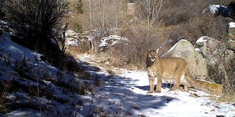 Remote Camera Mountain Lion Workshop tickets