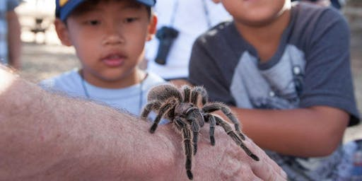 Tarantula Trek on Mount Diablo