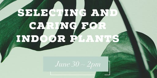 Selecting and Caring for Indoor Plants