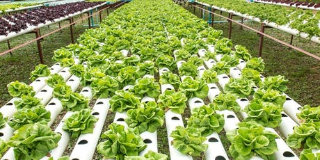 (PENANG)FREE HydroOrganics Home Farming System Preview tickets