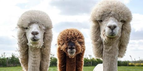 Raising Alpacas tickets