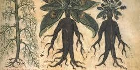 Growing Magic: Explore the holy, healing and wicked aspects of plants (Growing Culture)